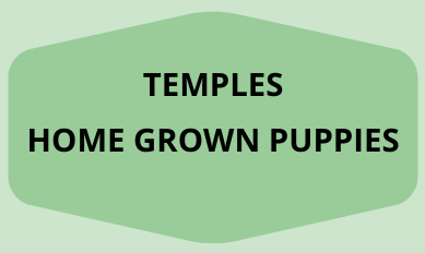 Temples Homegrown puppies